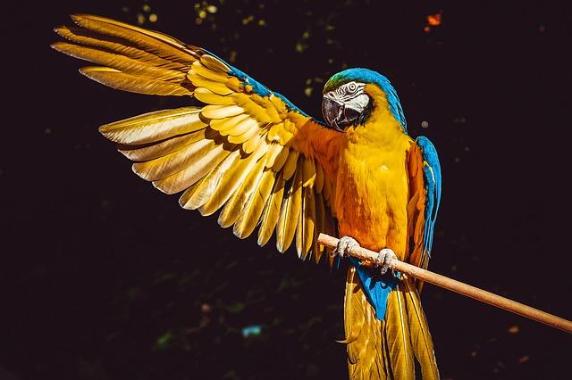 וטרינר 24 שעות מוסמך גם לבעלי כנף