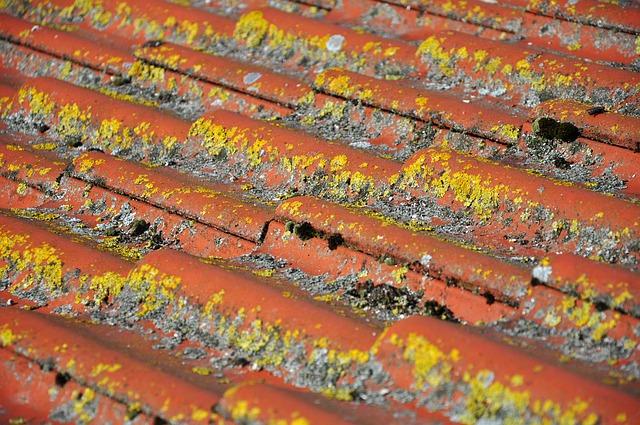 נזילה מגג הבניין