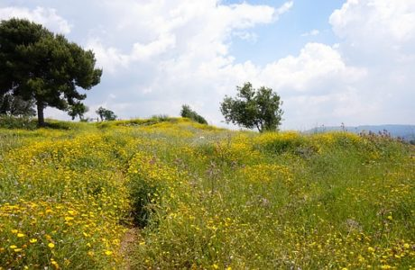 אביב הגיע פסח בא: מסלולי טיולים לכל המשפחה