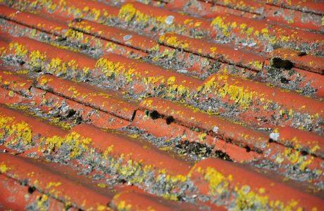 נזילה מגג הבניין? מה עושים?